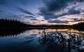Картинка лес, закат, озеро, сумерки