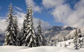 Обои зима, лес, снег, деревья, горы