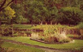 Картинка лето, растения, трав, сад зелень