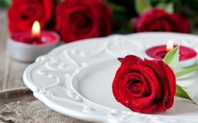 Обои капли, цветы, капельки, роза, свечи, бутон, тарелка