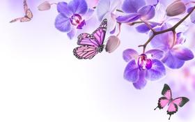 Картинка бабочки, цветы, орхидея, flowers, orchid, spring, purple