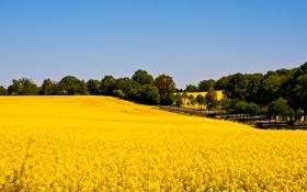 Картинка дорога, поле, небо, рапс