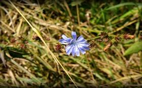 Обои поле, Цветок, Россия, Ока