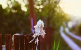 Картинка природа, закат, трава, забор, боке