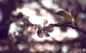 Картинка цвета, солнце, веточка, луч, Цветок, by mike pro