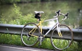 Обои дорога, природа, bike