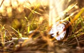 Обои трава, часы, крышка, циферблат, боке