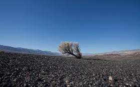 Обои дерево, земля, холмы, камушки