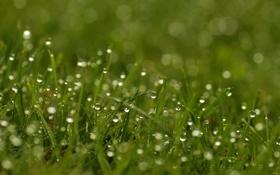 Обои трава, макро, роса, утро