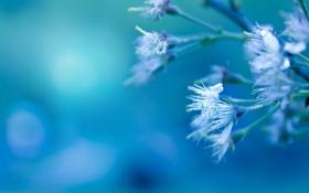 Картинка макро, цветы, ветка