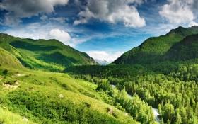 Обои лес, небо, облака, горы, река, голубое, Green highlands