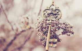 Обои цветок, ключ, keys
