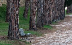 Картинка дорога, город, парк, скамья