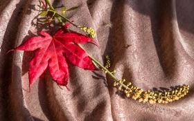 Обои осень, лист, ткань, клен