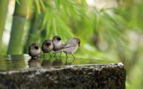 Картинка зелень, вода, птицы, камень, фокус