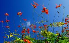 Картинка небо, трава, листья, макро, цветы, растение