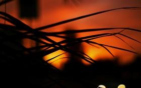Обои макро, свет, ночь, природа, огни, фото, пейзажи