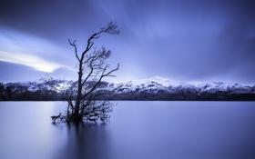 Картинка небо, облака, снег, горы, озеро, дерево