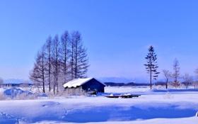Обои горизонт, деревья, зима, снег, небо, дом