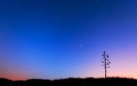 Обои звезды, горизонт, небо, дерево