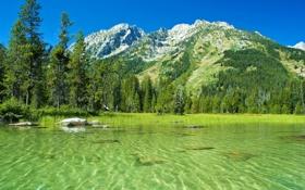 Обои США, пейзаж, фото, вода, природа, горы, Grand Teton