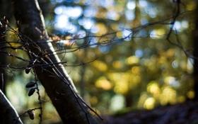 Обои лес, ветки, природа, ветви, боке