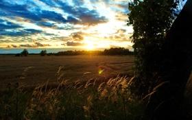 Обои пейзаж, небо, поле, пшеница, пррода, колоски, солнца