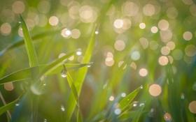 Картинка green, light, grass, drop, makro