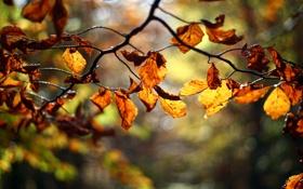 Обои листья, осень, красные, оранжевые, ветка, дерево, размытость