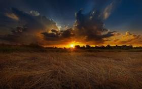 Картинка пшеница, поле, лето, закат, природа