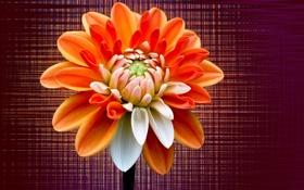 Обои цветок, текстура, лепестки, стебель