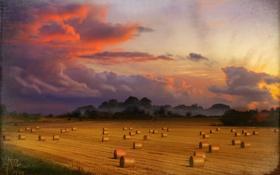 Обои поле, небо, урожай, собран