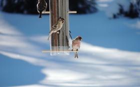 Картинка зима, снег, птицы, кормушка