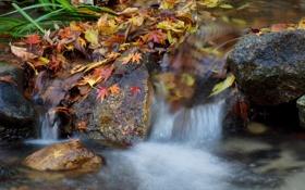 Картинка осень, листья, река, камни, водопад