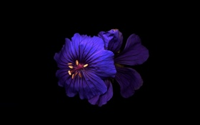 Картинка цветок, обои, тень, фон, свет, лепестки