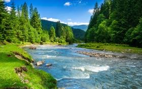 Обои зелень, трава, деревья, пейзаж, горы, природа, река