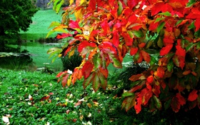 Картинка осень, трава, листья, пруд, куст