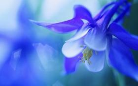 Обои цветок, макро, колокольчик, flower, macro, bell