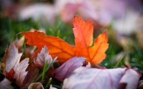 Картинка осень, трава, цвета, макро, природа, фото, фон