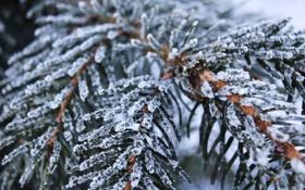 Обои зима, снег, иний, ветка