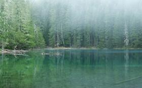 Картинка лес, вода, деревья, пейзаж, природа, туман, озеро