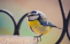 Обои фон, птичка, маленькая