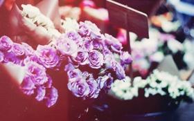 Картинка цветы, букет, лепестки, сиреневые