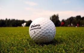 Картинка трава, газон, мячик, гольф, golf, ball