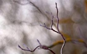 Обои ветки, фото, фон, серость, ветви, обои, весна