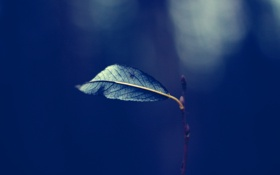 Картинка осень, листья, природа, одиночество, печаль, листок, Макро