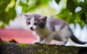 Картинка мох, малыш, котёнок
