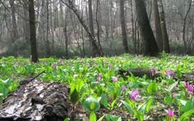 Картинка лес, деревья, цветы, весна, день, полянка, первоцветы