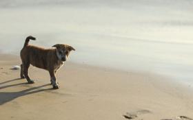 Картинка пляж, собака, щенок