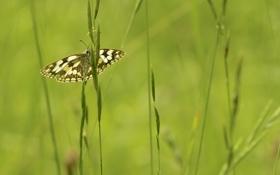 Обои макро, природа, бабочка